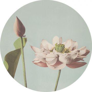 självhäftande rund tapet lotusblomma milt rosa och vintage gråblått från ESTA home