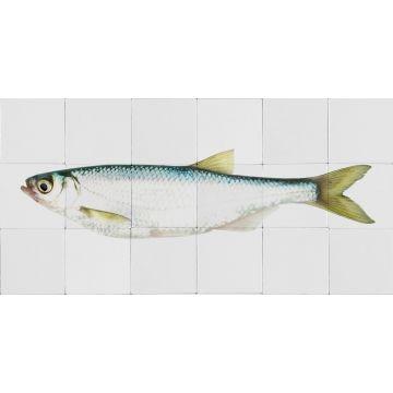 wallsticker fisk gul och blått från ESTA home