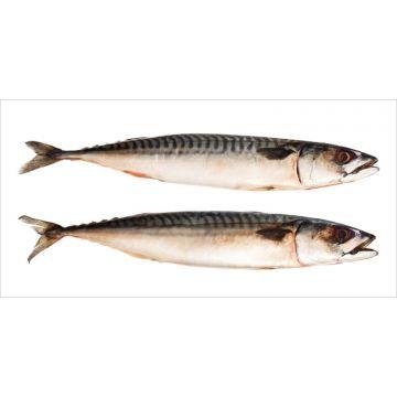 wallsticker fiskar grått från ESTA home