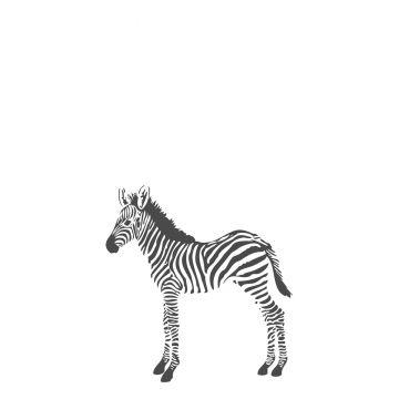 fototapet zebror svart och vitt från Origin